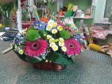 Люба Флора - фото 1