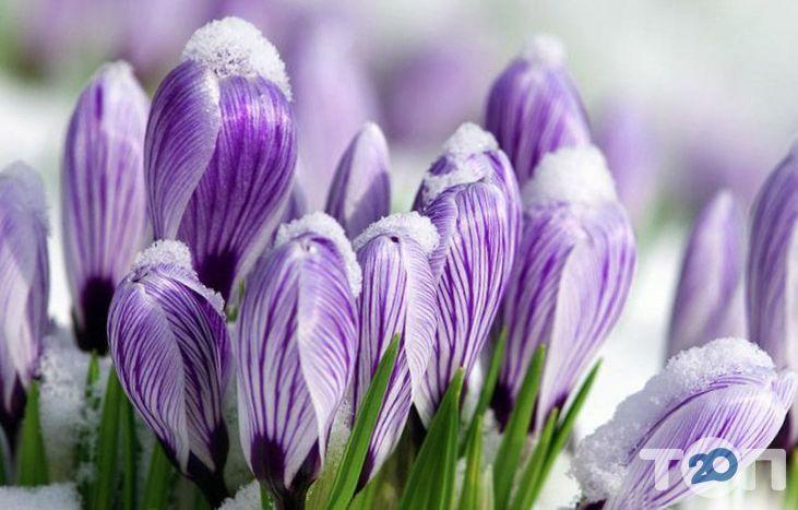 Авеста Флора, квіткова студія - фото 2