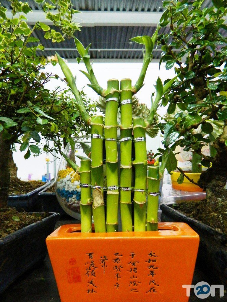 Green flora, склад-магазин квітів - фото 9