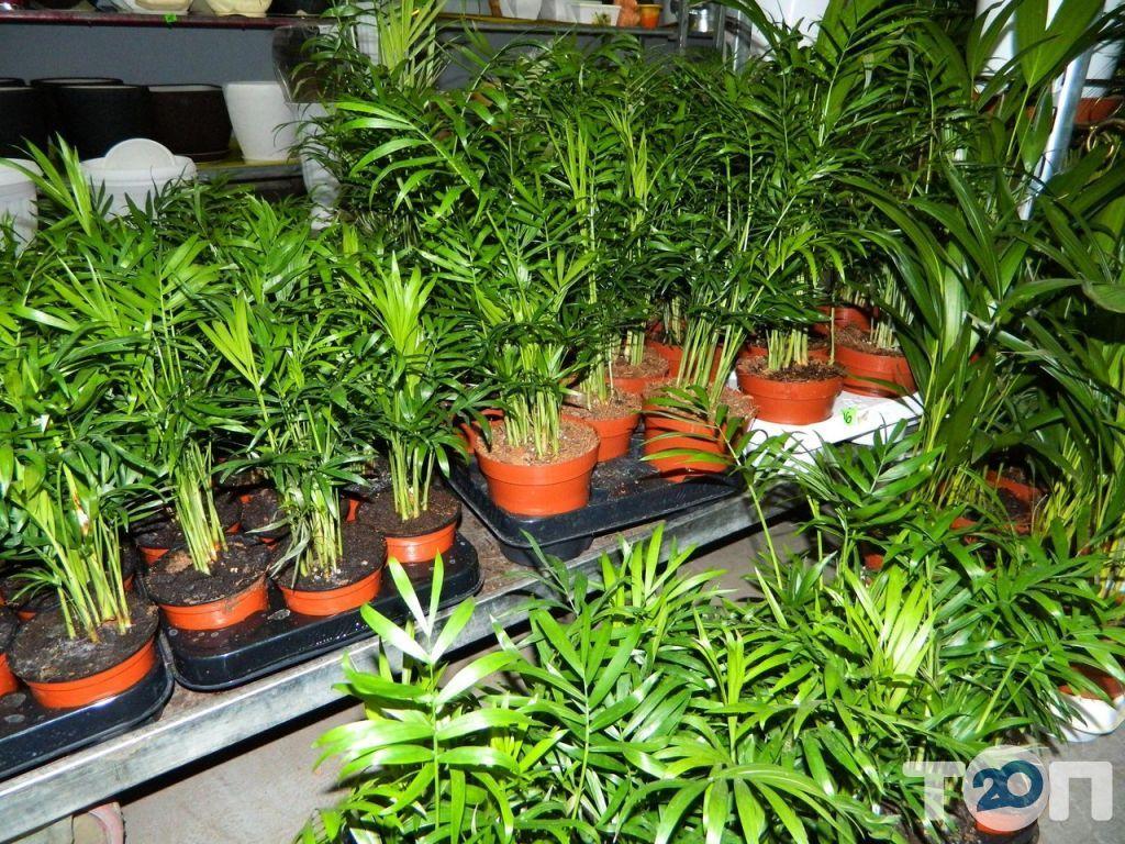Green flora, склад-магазин квітів - фото 10