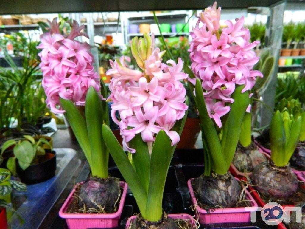 Green flora, склад-магазин квітів - фото 13