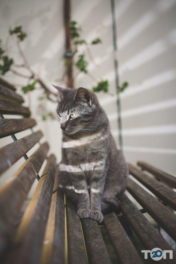 Лапусик, cалон для тварин - фото 2