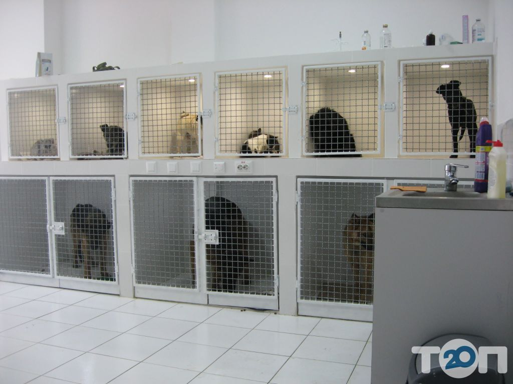 Vip хвіст, ветеринарна клініка - фото 10