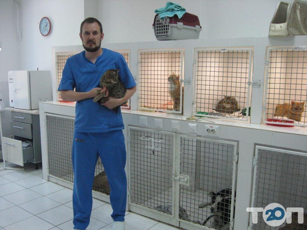 Vip хвіст, ветеринарна клініка - фото 16