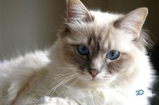 Котіко, зоомагазин - фото 1