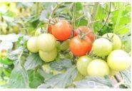 Фруктовий рай, мережа магазинів овочів та фруктів фото
