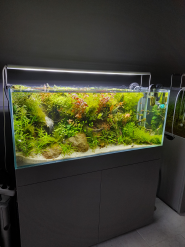 Palamarchuk Aqua Design, студія акваріумів фото