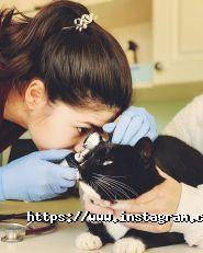 ВертыХвист, ветеринарные услуги фото