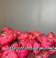 Авеста Флора, цветочная студия фото