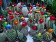 Green flora, склад-магазин квітів фото