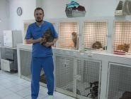 Vip хвіст, ветеринарна клініка фото