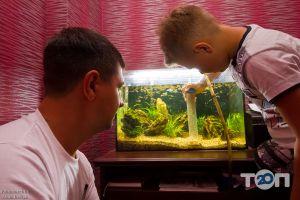 Palamarchuk Aqua Design, студія акваріумів - фото 10