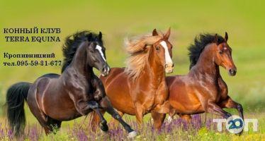 Terra Equina, конный клуб фото
