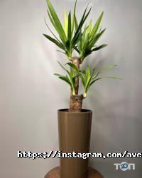 Авеста Флора, квіткова студія - фото 10