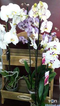 Green flora, склад-магазин цветов - фото 9