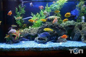 Аква Арт Студія, студія акваріумного дизайну - фото 3