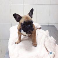 Alvet, ветеринарний центр - фото 10