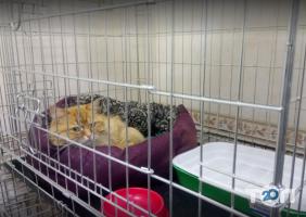 Друг, ветеринарна клініка - фото 5
