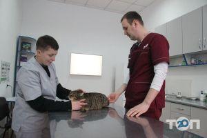 Два кота, ветеринарна клініка - фото 6