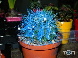 Green flora, склад-магазин квітів - фото 23