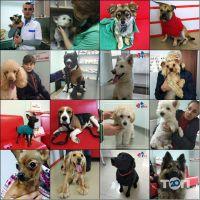 IVet, клініка ветеринарної медицини - фото 2