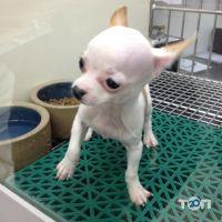 Колумбус, клініка ветеринарної медицини - фото 2