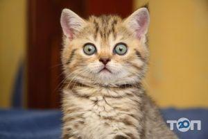 Котіко, зоомагазин - фото 2