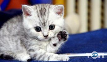 Котіко, зоомагазин - фото 4