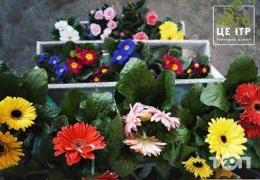 КвітоЦентр, гуртівня квітів - фото 8