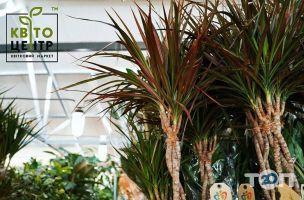 КвітоЦентр, гуртівня квітів - фото 9