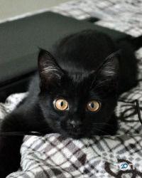 Лапусик, cалон для тварин - фото 1