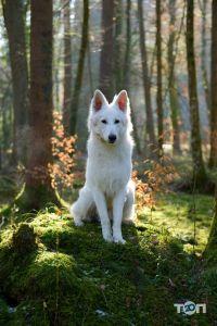 Лапусик, cалон для тварин - фото 3