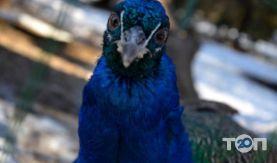 Одеський зоопарк - фото 24