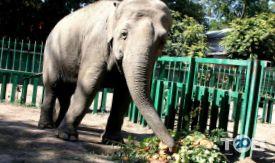 Одеський зоопарк - фото 27