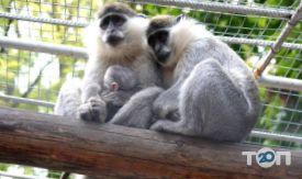Одеський зоопарк - фото 26