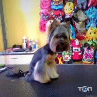Happy Dog, салон по догляду за тваринами - фото 1