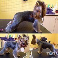 Happy Dog, салон по догляду за тваринами - фото 2