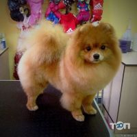 Happy Dog, салон по догляду за тваринами - фото 3