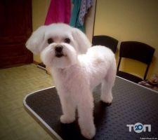 Happy Dog, салон по догляду за тваринами - фото 4