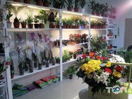 Trava, салон цветов - фото 1