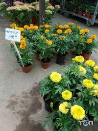 Цветы от Максимовой, живі квіти оптом - фото 10