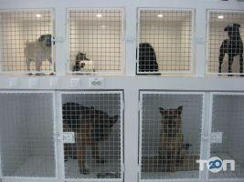 Vip хвіст, ветеринарная клиника - фото 11