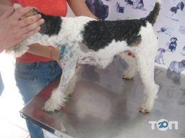 Vip хвіст, ветеринарна клініка - фото 17
