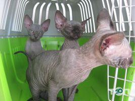Vip хвіст, ветеринарна клініка - фото 15