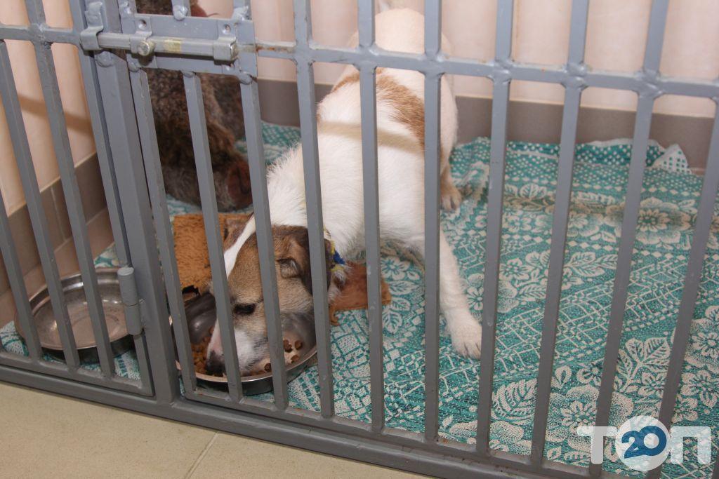 Багира, ветеринарная лечебница - фото 17