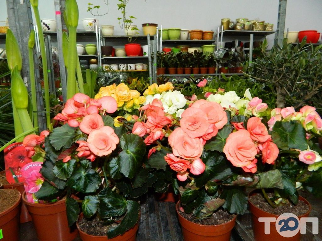 Green flora, склад-магазин цветов - фото 11