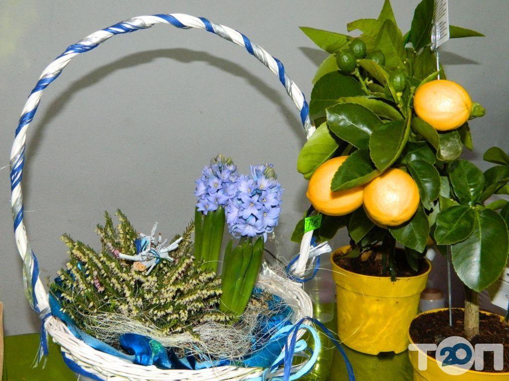 Green flora, склад-магазин цветов - фото 12