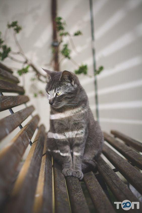 Лапусик, салон для животных - фото 2
