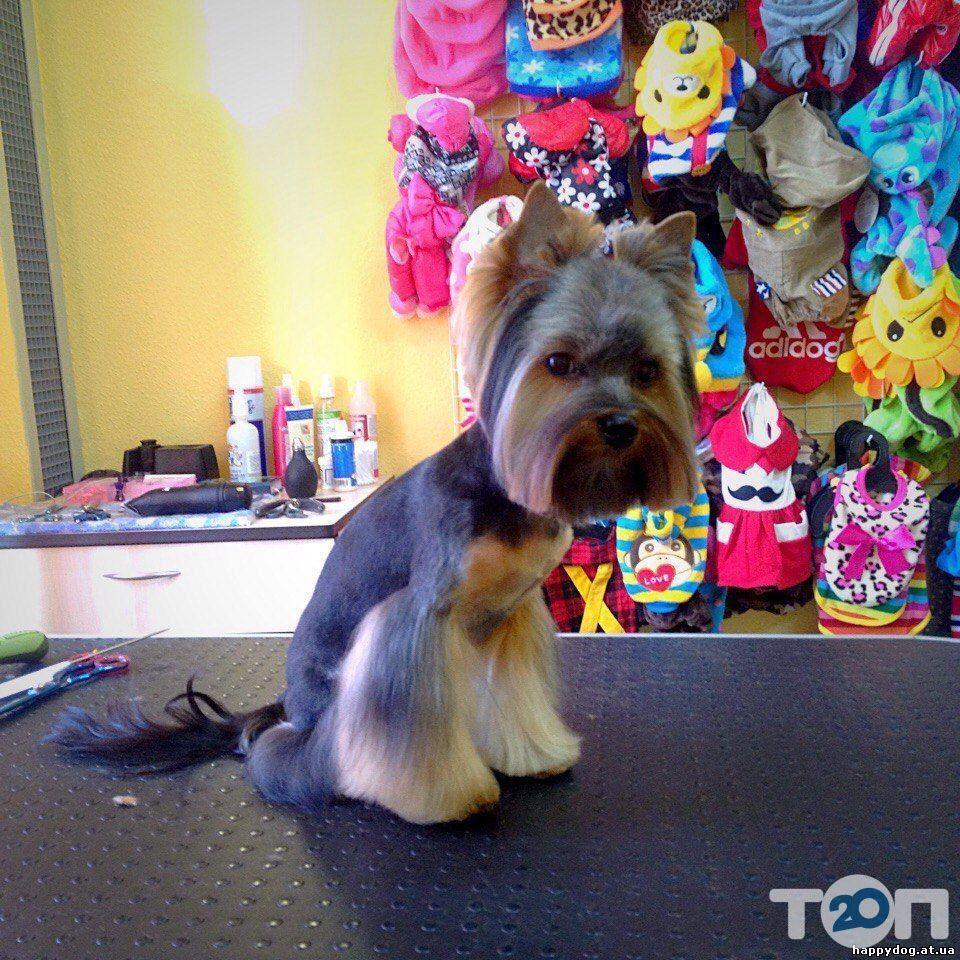 Happy Dog, салон по уходу за животными - фото 1