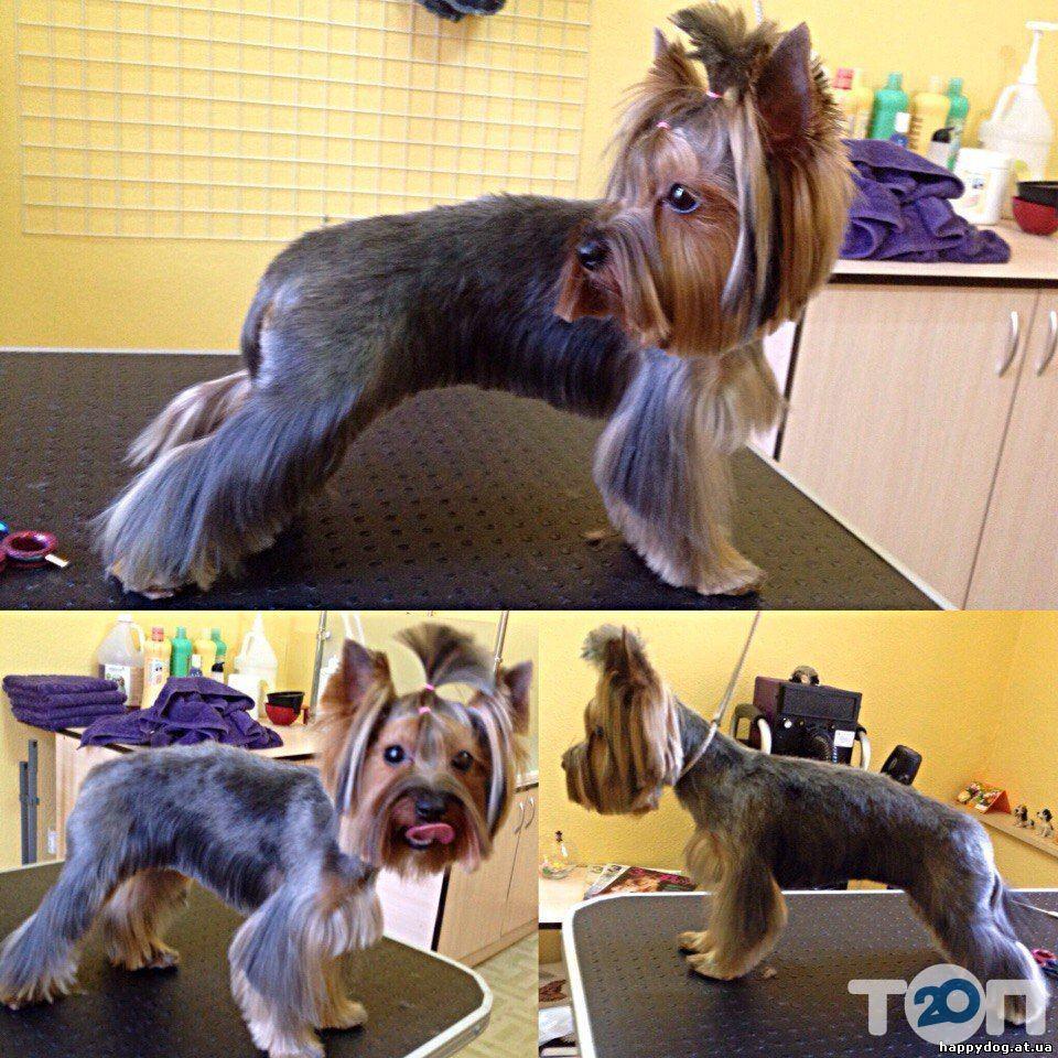 Happy Dog, салон по уходу за животными - фото 2